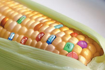 Nemet mondott az EP a GMO-s termékek forgalmazását korlátozni kívánó indítványra (Fotó: foodandwine.hu)
