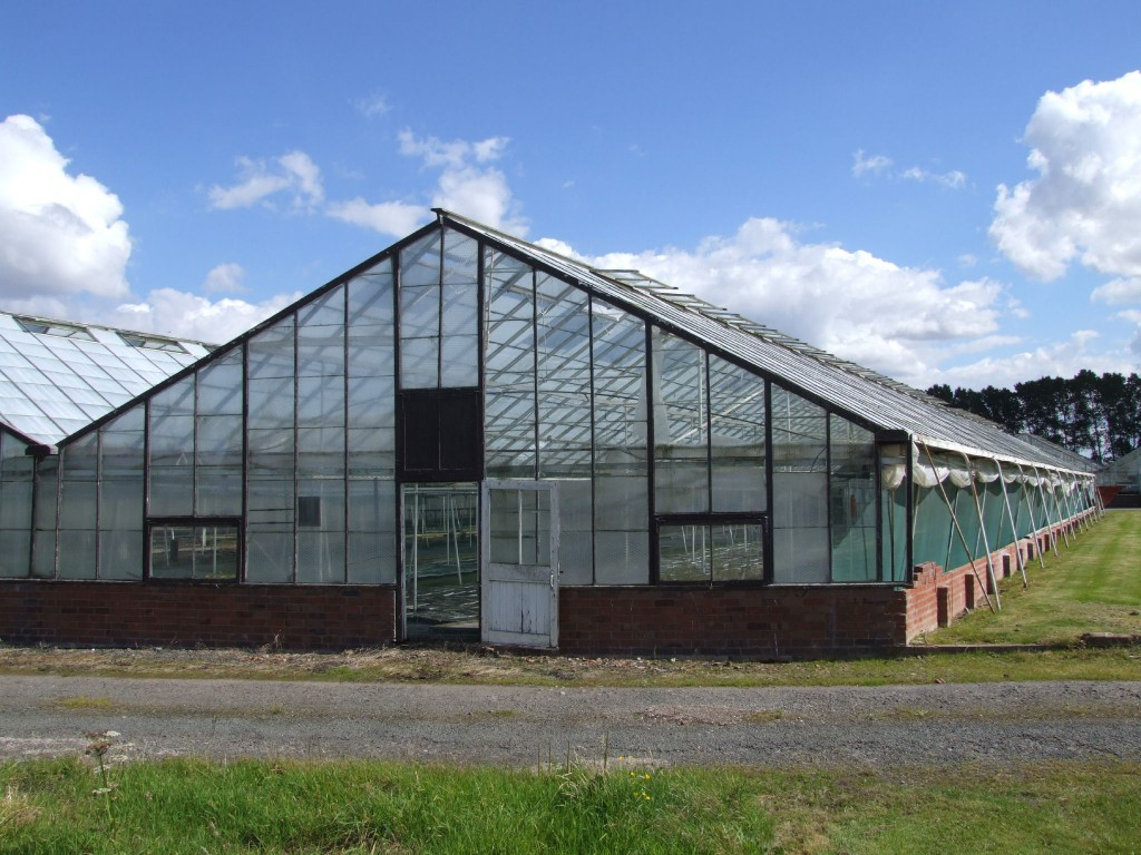 Üvegházak létesítésére is pályázhatnak majd a zöldségtermesztők
