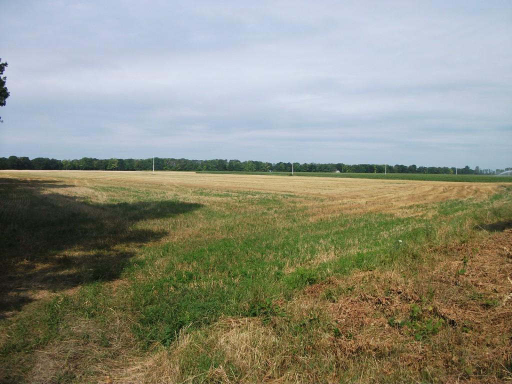 A földárverések során állami tulajdonban lévő termőföldeket árvereznek el