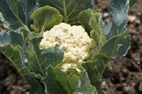 Most a zöldséges gazdákon a sor, többféle támogatást is kaphatnak.
