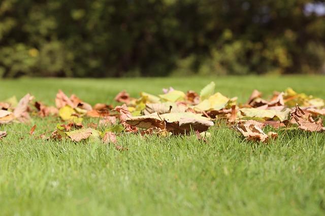 A gyepek ápolására is fordítsunk fokozott figyelmet ilyenkor, ősszel