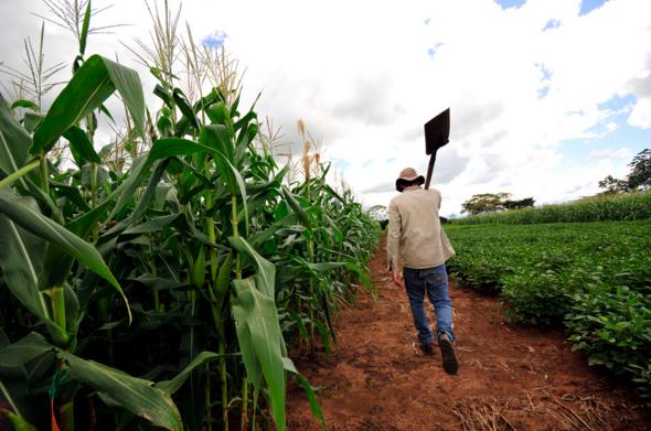 Van-e élet a kukoricán túl is?