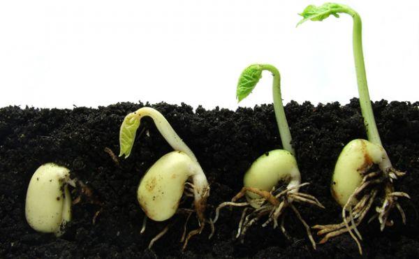 Csak a megfelelő körülmények között kezdhetnek csírázni a magvak. Fotó: richpoi.com