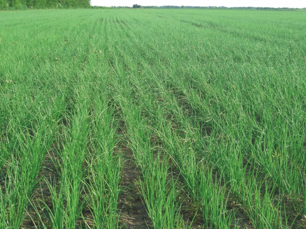 Fontos szerepet töltenek be a növények életében a talajbaktériumok