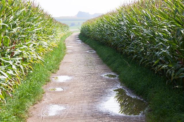 Leginkább a gabonafélék árbevétele nőtt