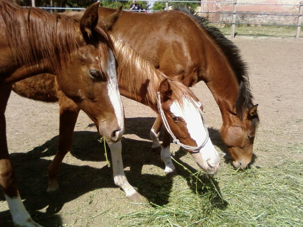 Pilisjászfalun már a lovak után is adózni kell