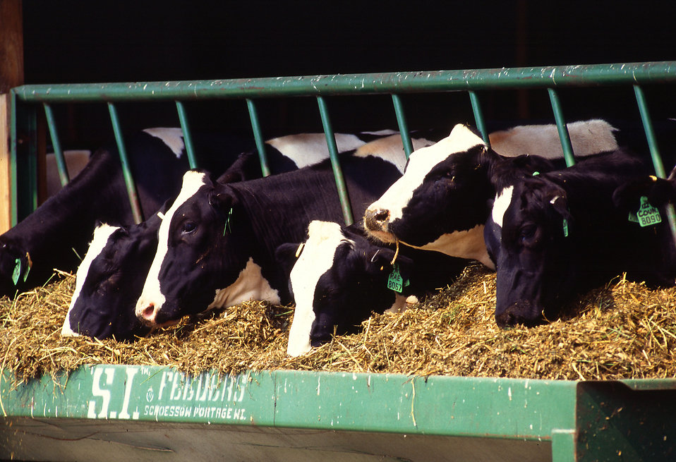 Megjelent az állattartó telepek korszerűsítését támogató felhívás
