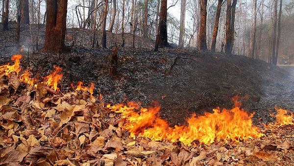A száraz avar könnyen meggyullad. Elég egy szikra és máris több száz fa, facsemete és kisállat eshet a lángok martalékává