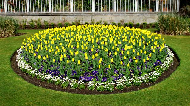 Inkább otthon virágozzanak a növények, mint a kertészetben