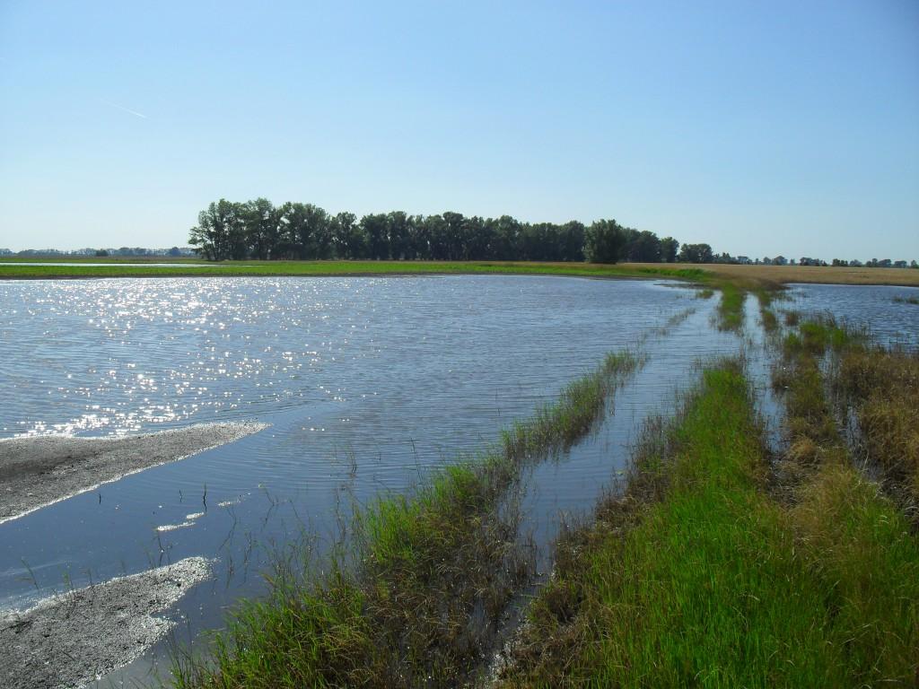 Sok gazdának okoz gondot a belvíz az utóbbi időszakban