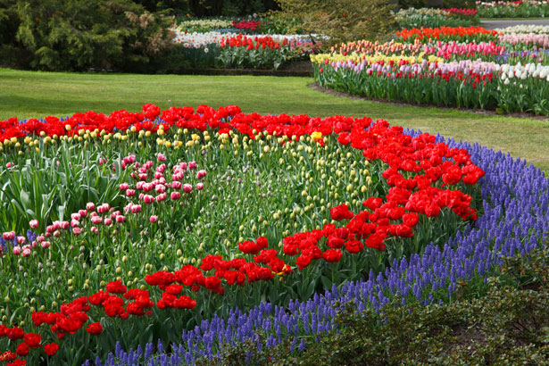 Egy jól megtervezett virágoskert igen dekoratív látványt tud nyújtani