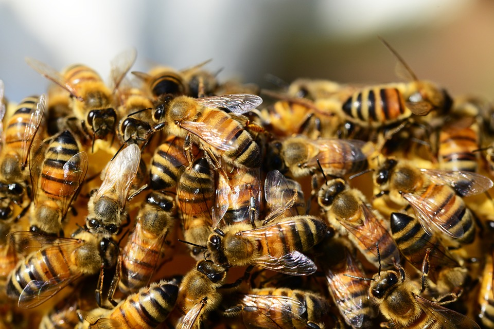 A méhkirálynő gyengélkedése az egész család életére kihat