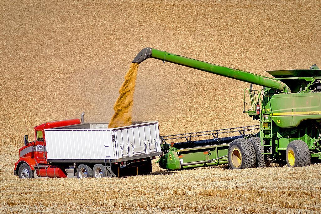 Jóval kevesebb kukoricát exportáltunk idén januárban, mint egy évvel korábban