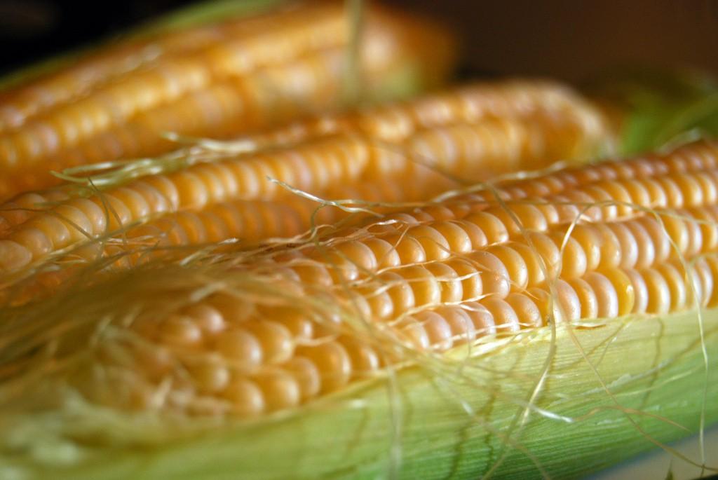Nem véletlenül fordítanak kiemelt figyelmet a csemegekukorica vetőmagokra, az abból fejlődő termés ugyanis közvetlenül a vásárlók asztalára kerül