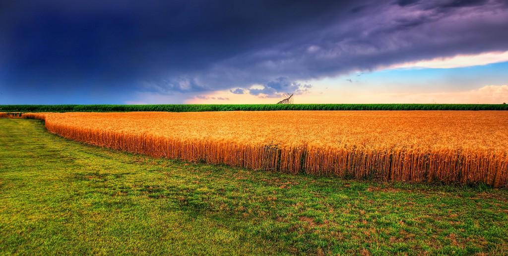 Az új rendszer az agráriumban is hasznos lehet