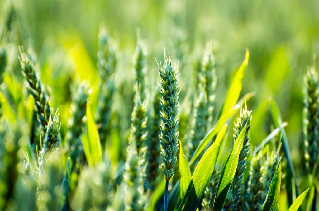 Az átalakítással könnyebé válhat a gazdák dolga is