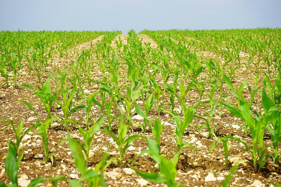 Növényvédelmi és talajvédelmi szaktanácsadót is igénybe kell venni annak, aki az AKG programban részt kíván venni