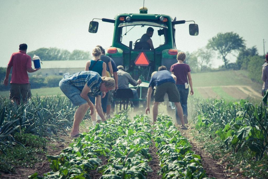 Városi fiatalok kóstolhatnak bele a vidéki életbe a Vidék kaland program keretében. Idén már több, mint 50 fiatal jelentkezett az eseményre. (Fotó: ritefmonline.org)