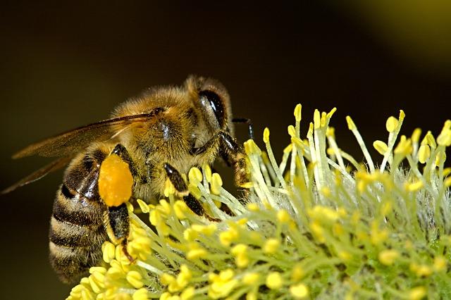 A méhek komoly munkát végeznek, hogy mi zamatos gyümölcsöket ehessünk