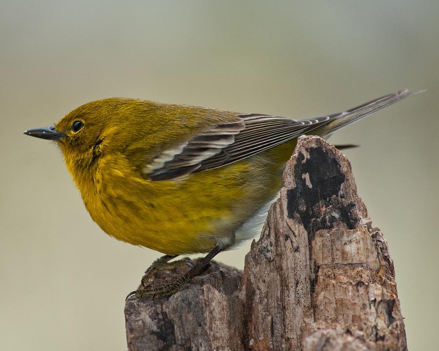 Nem tudja milyen madár látható a képen? Ezen segít mostantól a Madárhatározó applikáció!