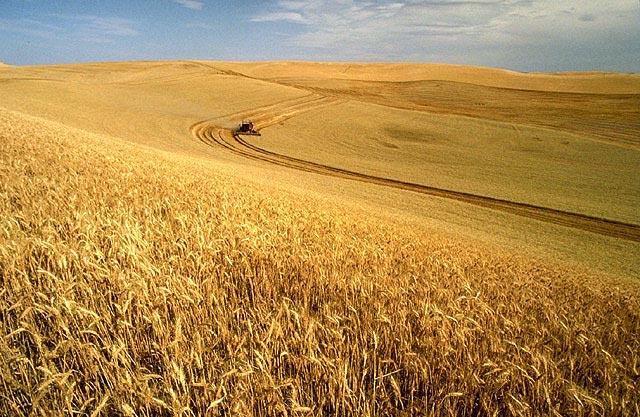 Idén eddig kevesebb kérelmet adtak be a gazdák, mint egy évvel ezelőtt