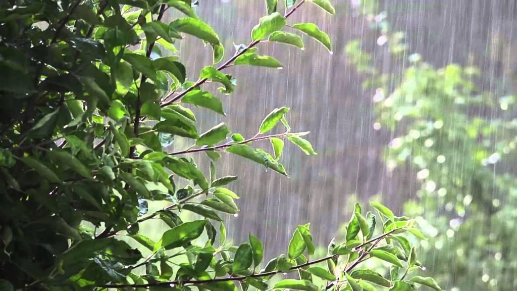Kell az eső a mezőgazdaságnak, de a gyümölcsfákat fenyegető betegségek miatt nem biztos, hogy jókor jön az égi áldás