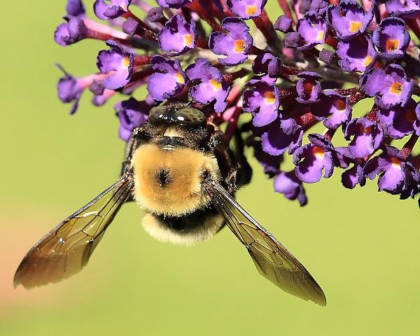 Nem sokat szorgoskodtak idáig a méhek (Fotó: shutterstock)
