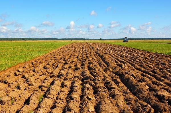 Továbbra is lehet állami földekre licitálni (Fotó: Shutterstock)