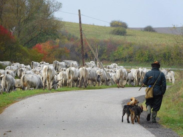 Ideális a település az állattartásra