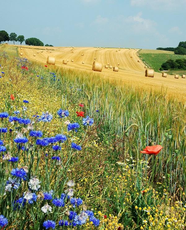 Nem csak a termelésre, hanem a termőterületet körülvevő ökoszisztémára is figyelni kell