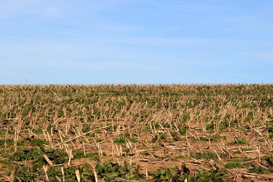 A tarló visszaforgatásával tápanyagot is juttatunk a talajba