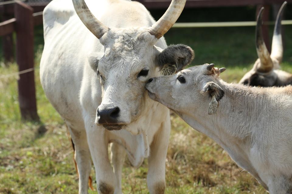 Az állattartás szerelmesei is találnak majd kedvükre való programokat