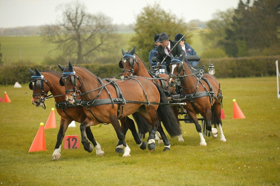 A fogathajtás az egyik leglátványosabb lovas sport