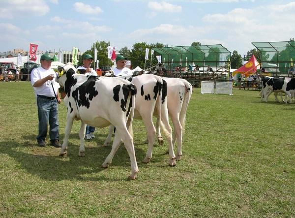 Idén is lesznek állatbemutatók a Farmer Expón (Fotó: semex.hu)