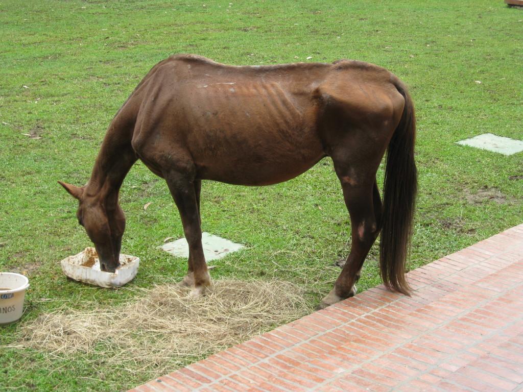 A beteg lovaknál is csodákra képes a fokhagyma