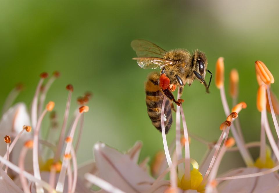 A méhek kihalásával munkahelyek kerülhetnek veszélybe
