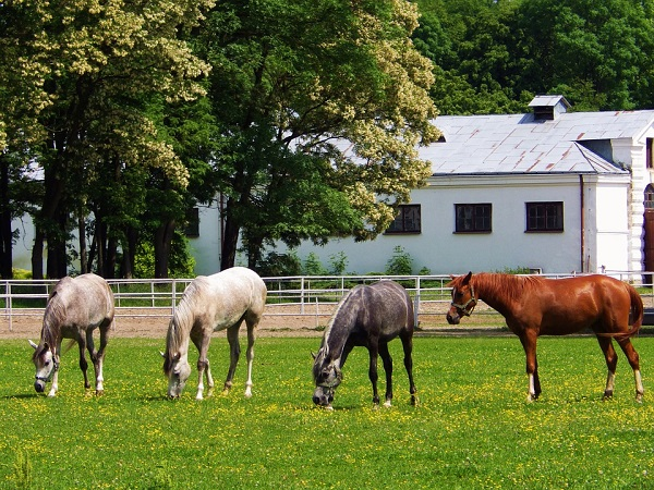 A mostani fejlesztés a magyar lovastársadalom osztatlan sikerét hozta
