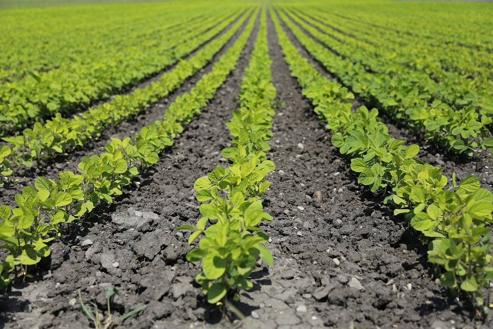 A mezőgazdaságunk továbbra is a GMO-mentességre fog épülni