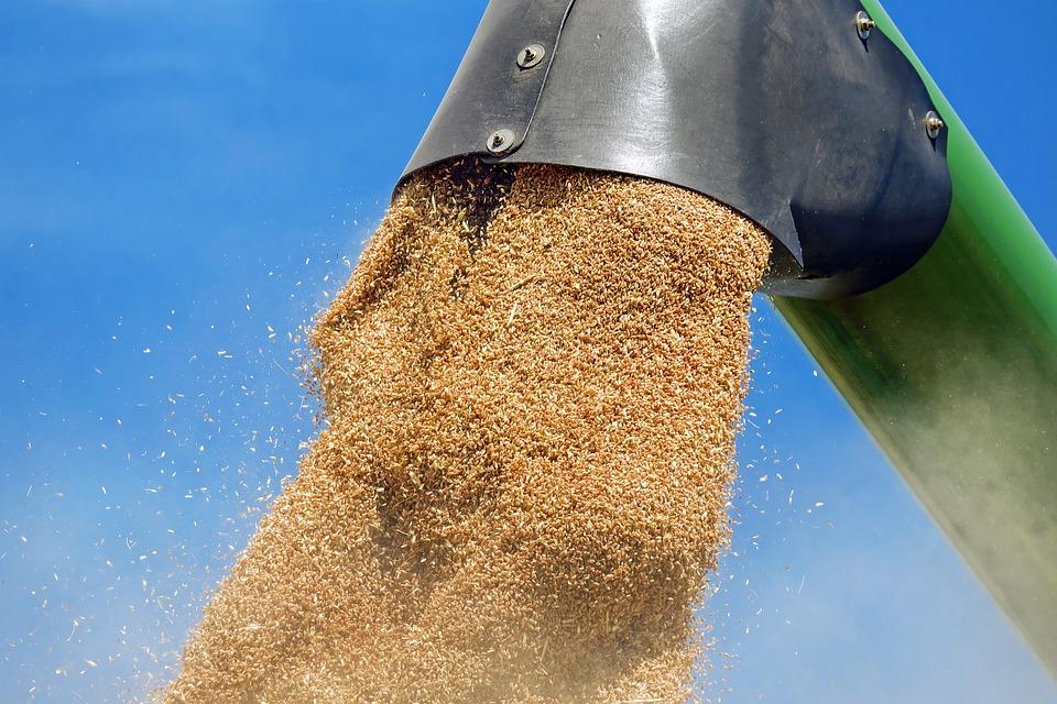 Egyre több búzából készítenek bioetanolt
