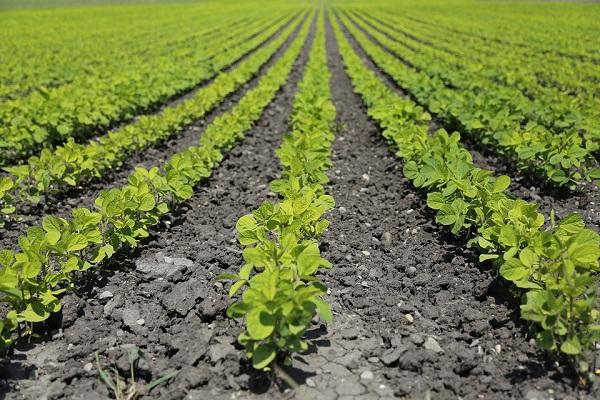 Még van idejük módosítani a beadott pályázatokon az ÖKO pályázaton résztvevő gazdálkodóknak