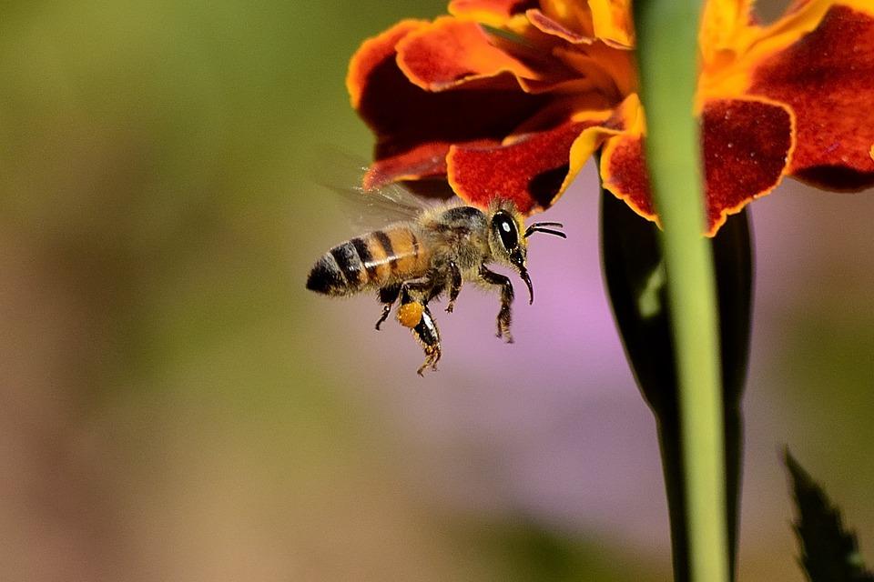 Mini drónok helyettesíthetik a jövőben a méheket
