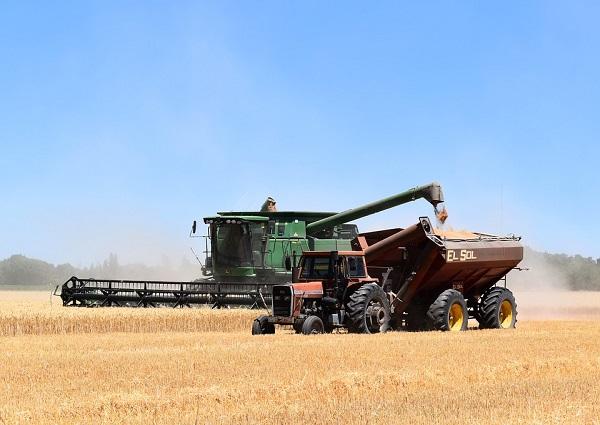 A gabonafélék nem lesznek drágábbak, az olajos magvakért viszont többet kell majd fizetni