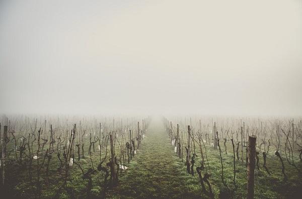 Hideg ide vagy oda, a gazdák szorgalmasan metszik már a szőlőt