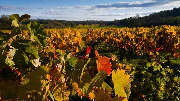 A jövőben már egy helyszíni szemlét követően a helyszínen, azonnal elrendelhetik az elhanyagolt szőlők kivágását