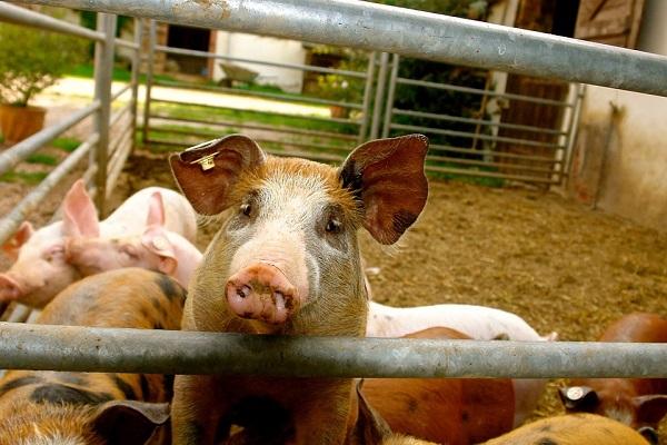Precíziós eszközök használatával az állattartás is egyszerűbbé válik