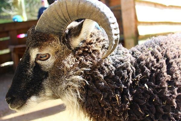 nem is olyan csekély összegű támogatáshoz juthatnak most az állattenyésztők