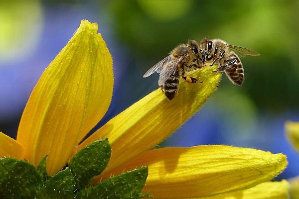 Szaktudás nélkül a jövőben már nem lehet méhészkedni
