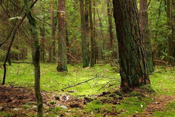 Évről évre növekszik a hazai erdőterületek mérete