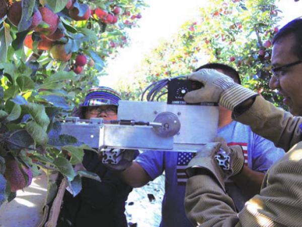 Még pár év és robotok szedhetik a fákról a gyümölcsöt (Fotó: agroforum.hu)