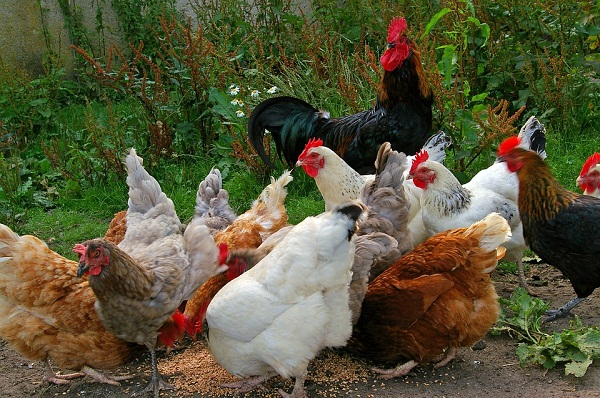 A rendelet módosítására a madárinfluenza miatt volt szükség